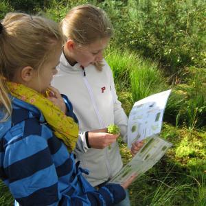 planteark om mosen studeres